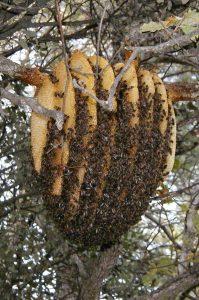 sun hive inspiration